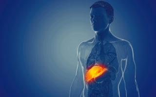Glycogène : Où sont placées vos principales réserves en énergie ?